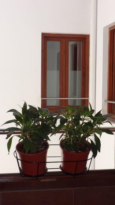 Patio interior / Courtyard