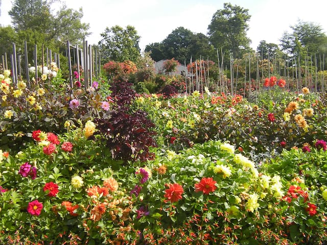Singleton Park, 6 minutes walk, has beautiful flower displays.