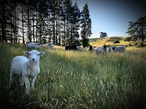 Stoneridge Farmstay, bed and breakfast