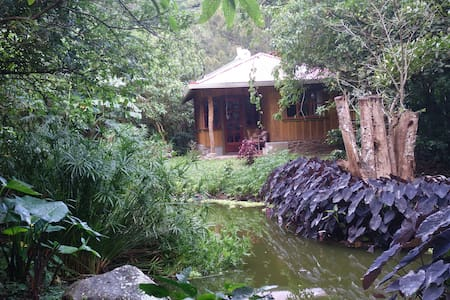 Querencia Homestead Lily Pad