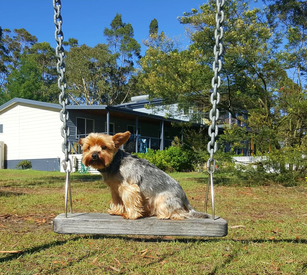 One of our little guests making himself at home on the swing.
