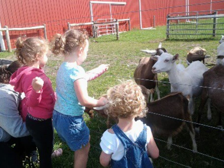 Kids meeting goat kids.  A great day on the farm