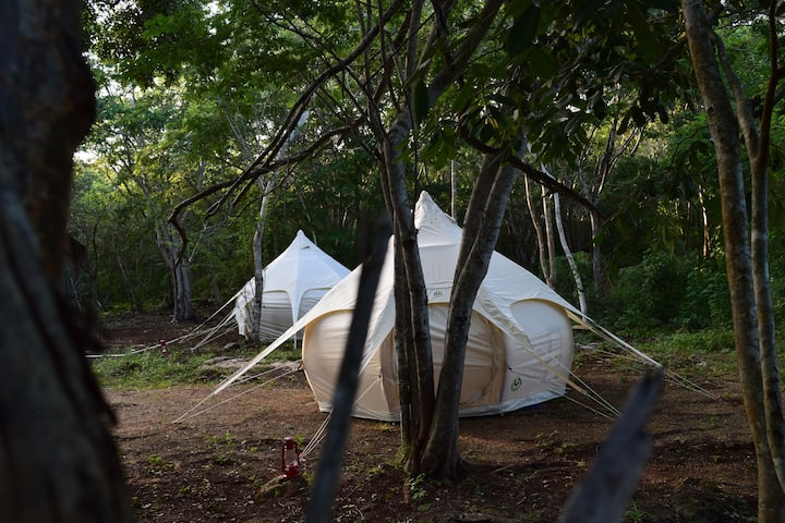 Into the wild (All inclusive Experience)