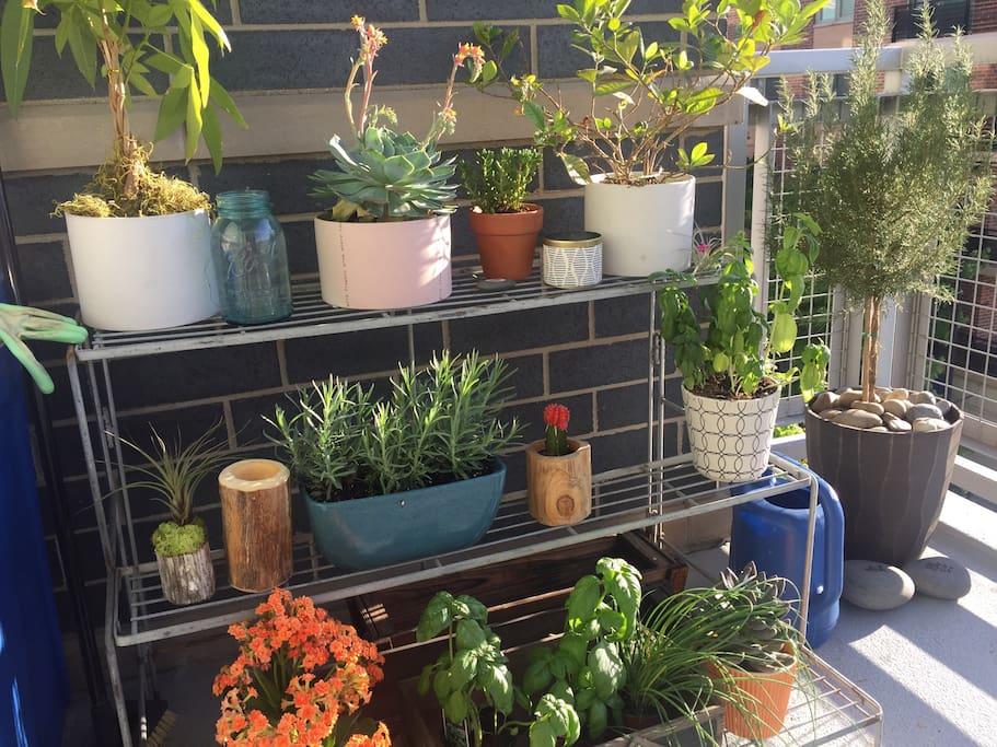 Herbs, Succulents, & Flowers