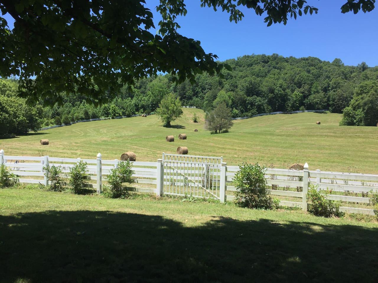 Hike around the pasture!