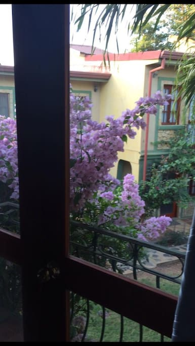 View from master bedroom French doors and beautiful flower bush