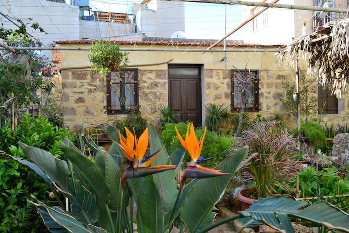 Mystery Garden Guest House - Aloe Vera