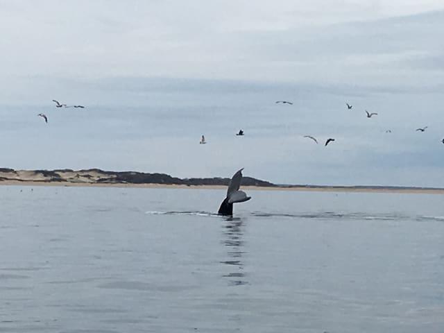Cosy Cape Getaway
