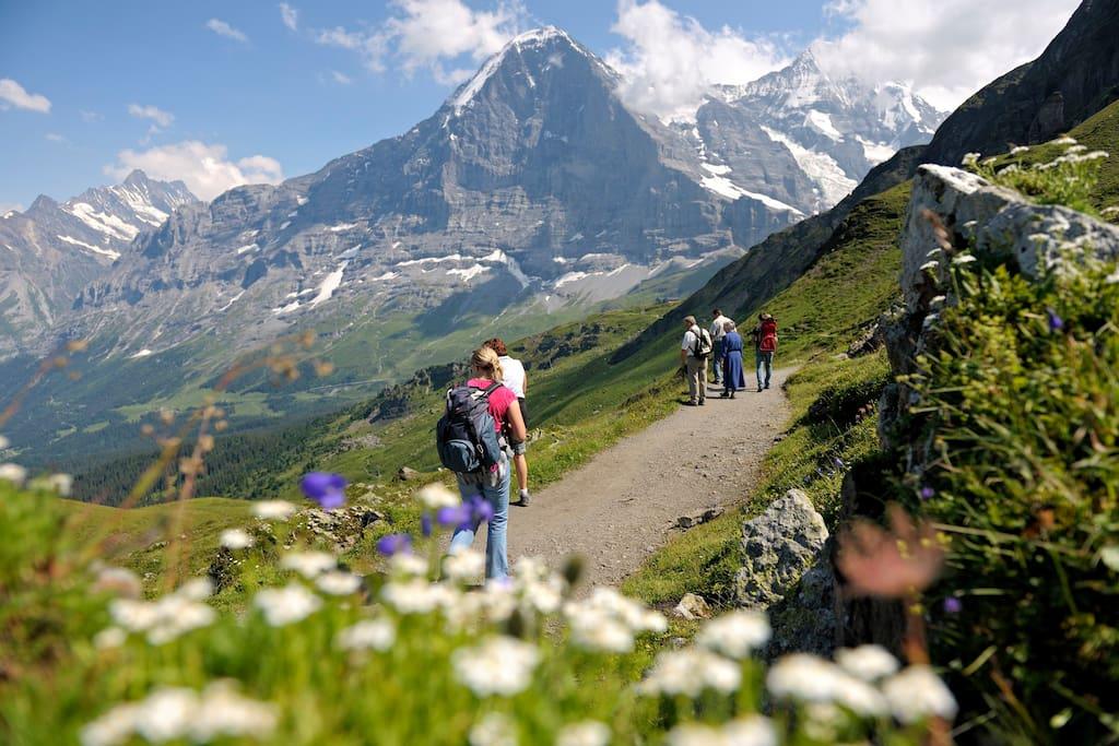 Wonderful hiking paths
