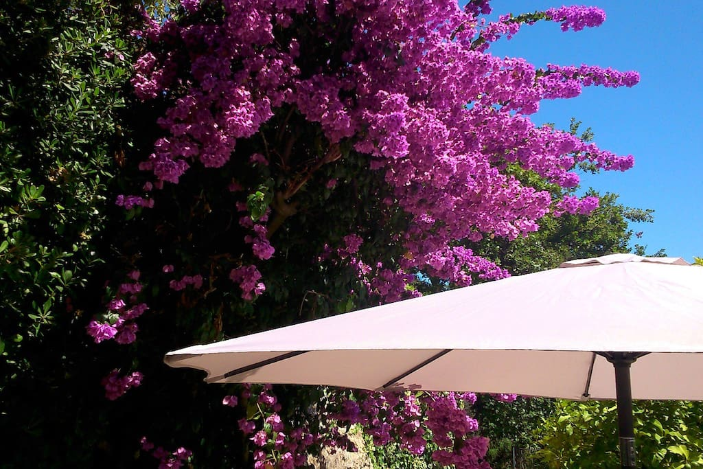 Outdoor canopy.