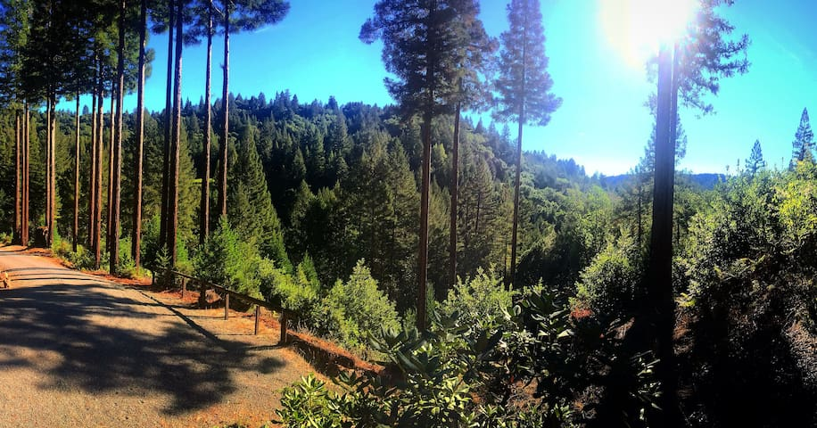 Paradise in the Redwood Forest - Healdsburg - House