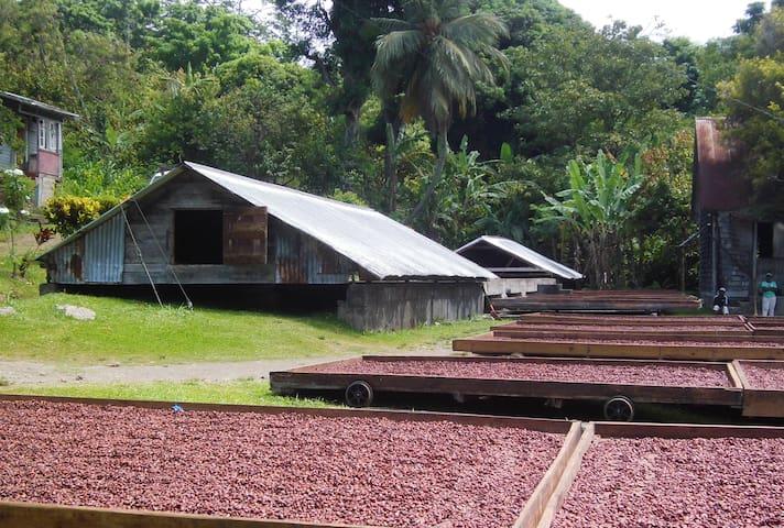Coco Drying at L'Esterre Estate