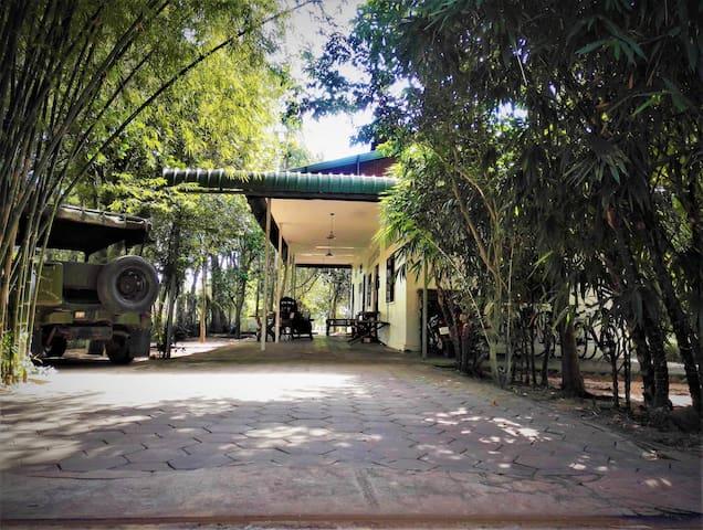Arcade de bambous