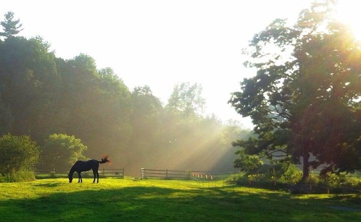 Bay Mountain Farm -Small Equine rescue & rehab.