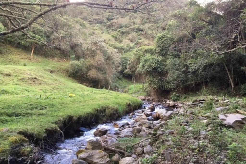 La quebrada San Simón nace en la reserva Madrigal del Podocarpus, es el inicio del rio Zamora, uno de los afluentes de la cuenca Amazónica.  The San Simón creek springs from the Madrigal del Podocarpus reserve; it is the beginning of the Zamora River, one of the tributaries of the Amazon basin.