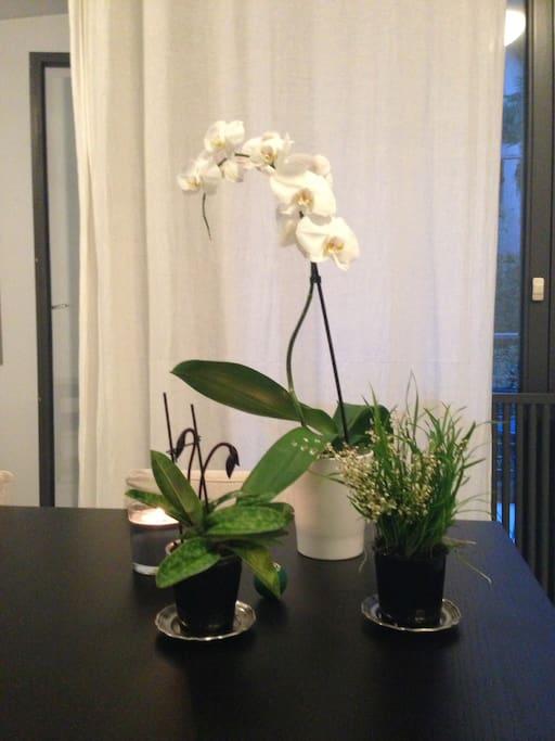 Quiet sunny room lugano paradiso appartamenti in for Stanze affitto lugano