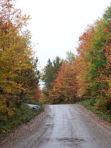 Fall colours on our road