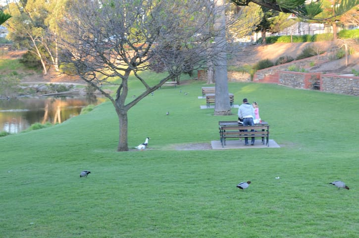 Feed the ducks at the river in Strathalbyn