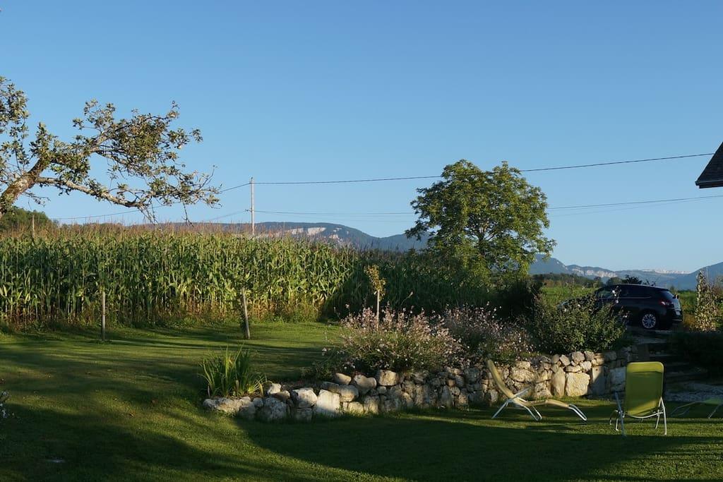jardin été maïs