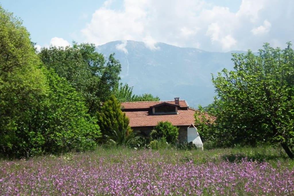 west side of villa eden in spring