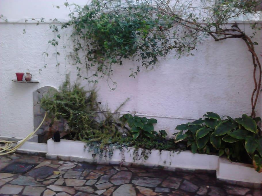 The back yard/garden