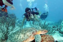 Certified diver or want to be?  Destin's two main dive operators are both less than 2 miles from Mojo.  Give it a try!  Our waters team with large turtles. colorful fish, dolphins, rays and absolutely massive (but docile) Goliath grouper.