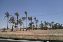 road through the palmeras de Elx leading to the Parc el Fondo
