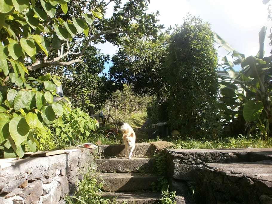 Our  garden and our beautiful dog