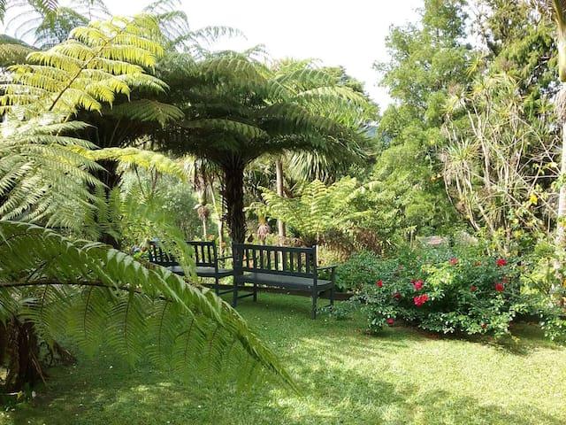 The Punga studio in Titirangi bush-garden setting