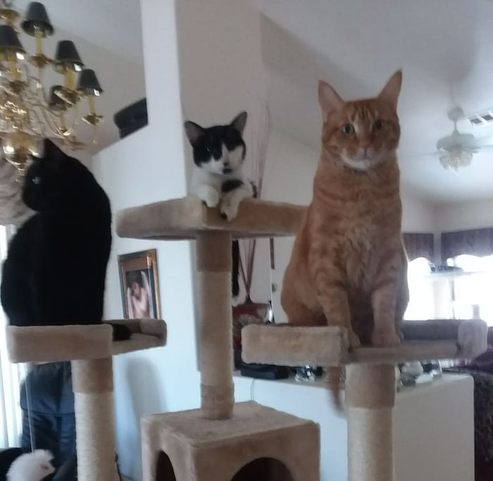 Very affectionate cats live in the home!