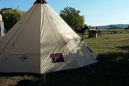 Tipi au milieu des chevaux - Feugarolles, Aquitaine Limousin Poitou-Charentes, FR