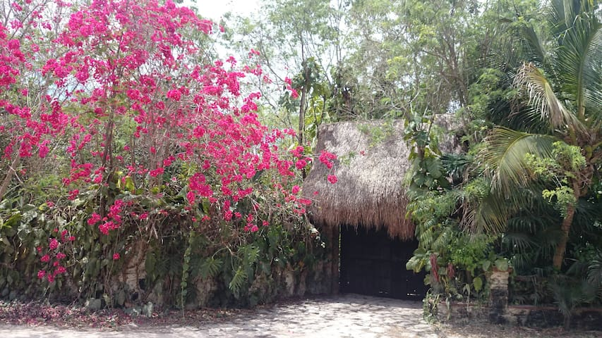 Cancun, Unique jungle house - Alfredo V. Bonfil