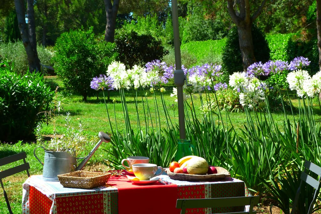 Le petit déjeuner  au calme, plein sud, face au jardin ... A quiet breakfast, due south, facing the garden ...