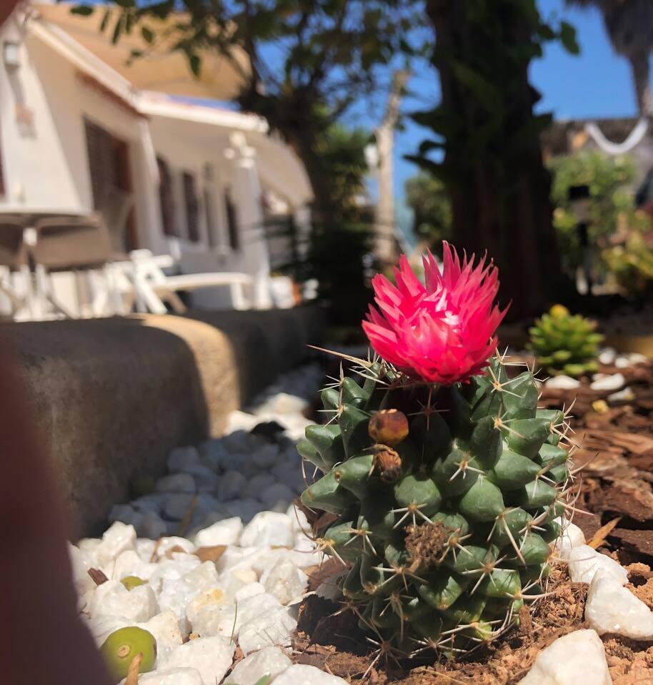 C'è una piccola area del giardino dedicata alle piante tropicali, questa è appena fiorita