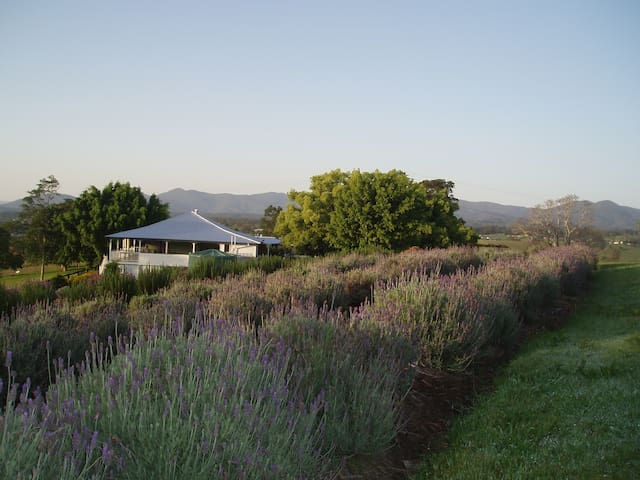 Blue Ridge Lavender Cottage - Couples