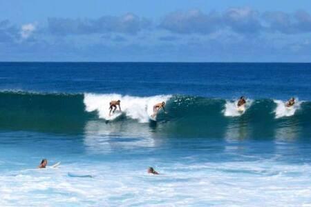 Surfers Paradise #3B - Haleiwa