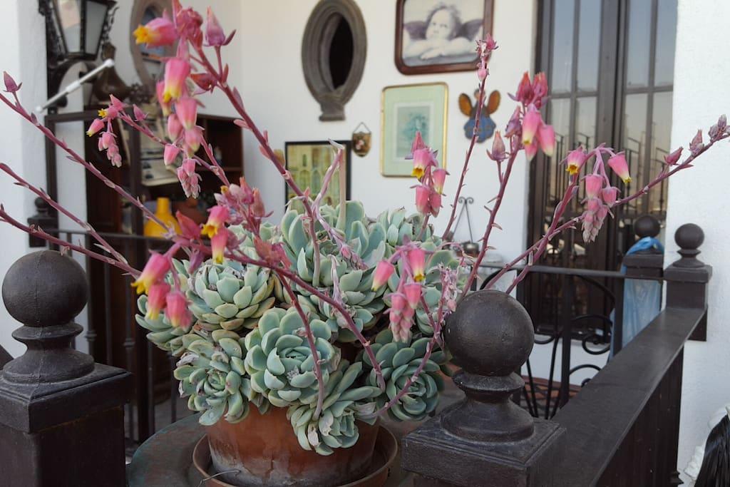 Bonita planta en la terazza