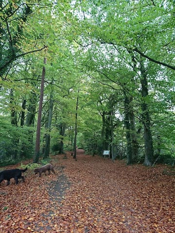 Frith Woods Nature Reserve, Slad. Another local ancient beech wood!