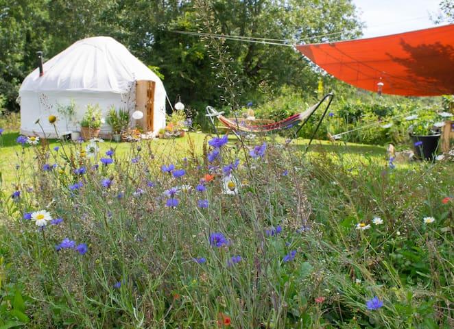 Yurt  & outdoor  area seen through Meadow