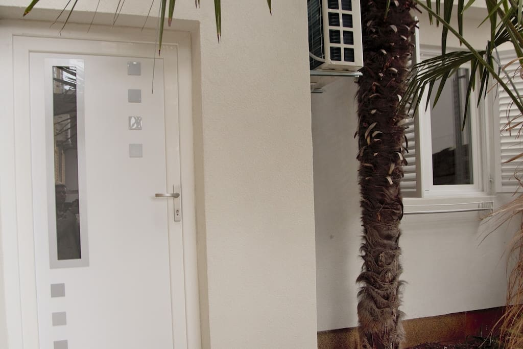 Door and palm tree