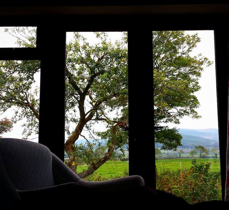 What a view from the couch! Over looking an old apple tree, lawn and out to the Ballyhoura mountains.