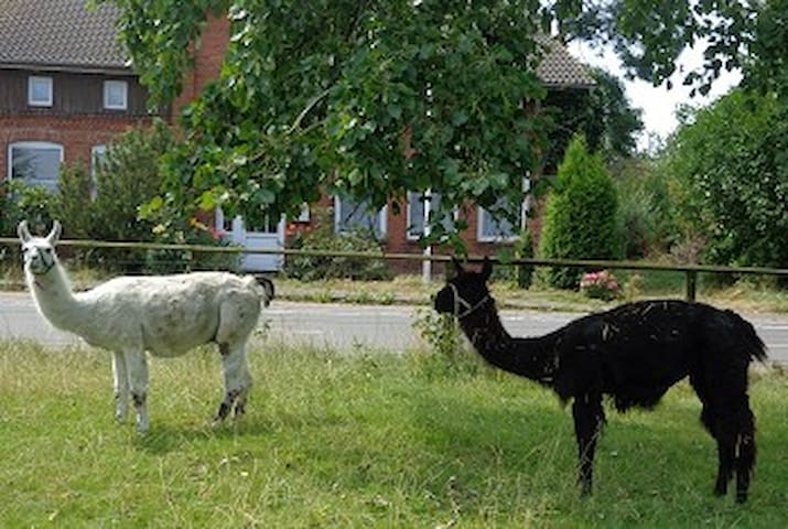 Unsere Lamas Ingo und Annabelle