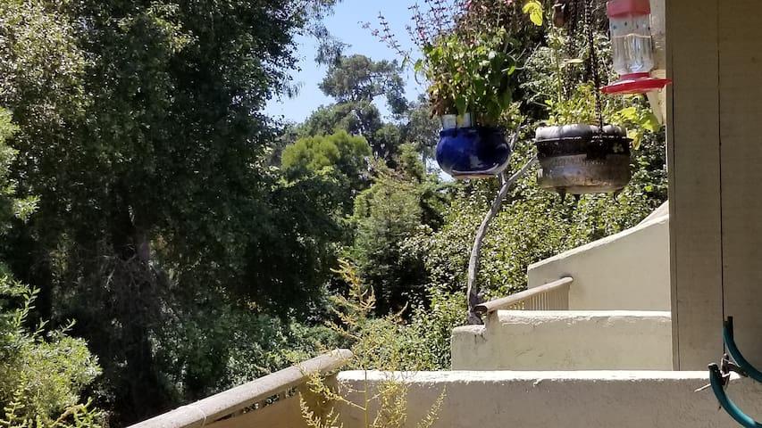 Balcony overlooking creek and humming bird paradise