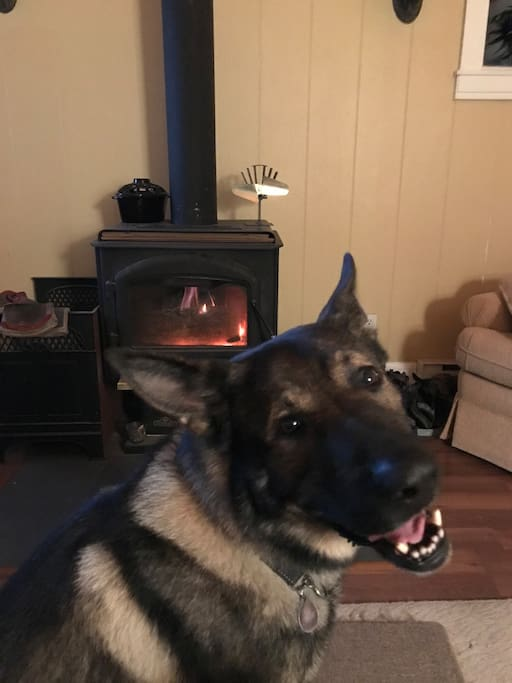 Kaiser appreciating the wood stove.