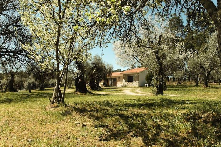 Quinta da Pedra Mija - nature and tranquility - Santar