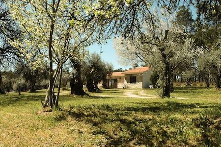 Quinta da Pedra Mija - nature and tranquility - Villa