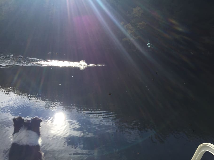 Rick swimming bye dock #1