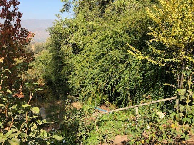 vegetación abundante