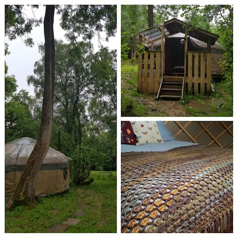 Luxurious woodland glamping yurt No 2