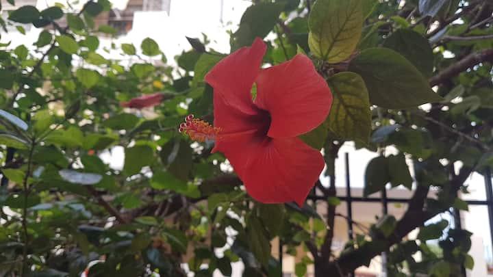 La Casa dell'Hibiscus Rosso